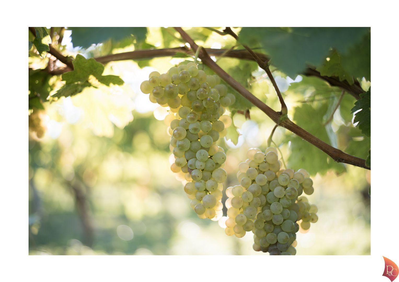 P&C Grappe Raisins blancs
