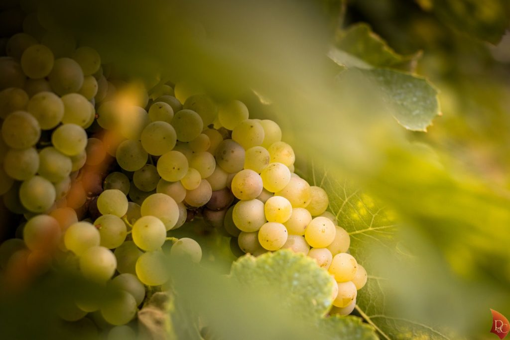 P&C Belle Grappe Raisins Blancs